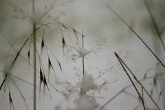 Champêtre : Un peu de neige