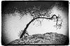 Baum über Wasser