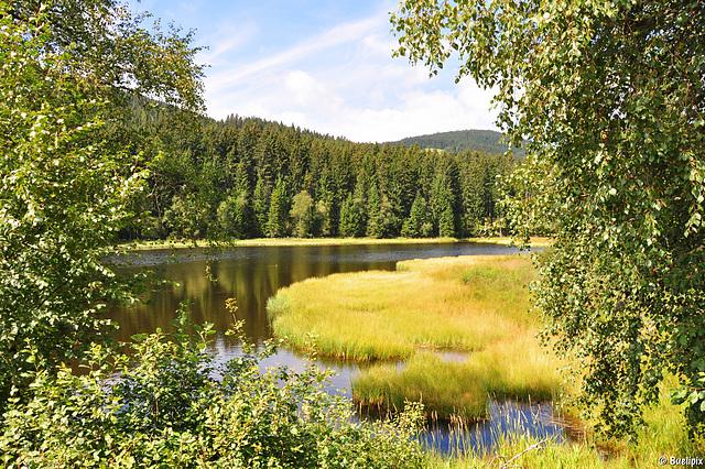 am Schluchsee (© Buelipix)