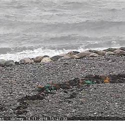 Screenshot 2018-11-14 Seal cam Cumbria Wildlife Trust