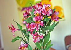 That Vase of Flowers