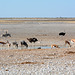 Namibia, Etosha National Park, Animals at the Watering Hole in the Morning