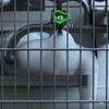 Oxygen Tank Fence