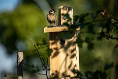 Les nouveaux voisins