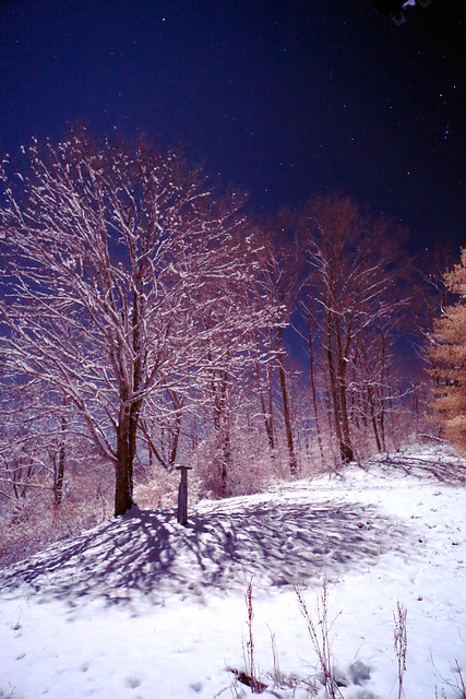 Snowy night moonlit infrared