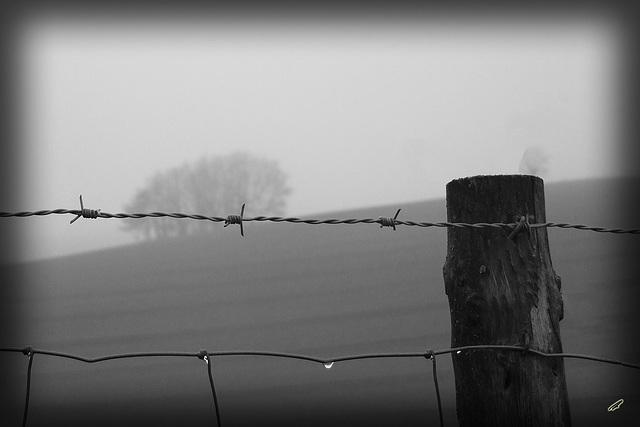 nebel pur#