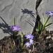 Spring Has Sprung  #1 – Outremont Borough, Montréal, Québec, Canada
