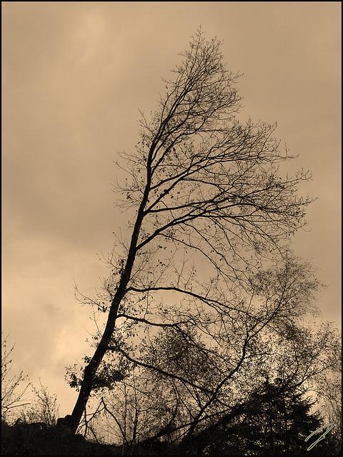 allein im wind#