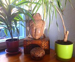 Meditation - meditado