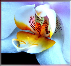 Center of an orchid... ©UdoSm
