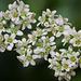 March 11 succulent flowers