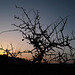Dawn is a feeling,  Penedos
