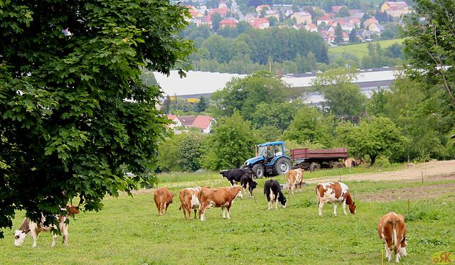 2015-05-29 095 Saksa Svisio, Götzinger Höhe, Neustadt/Sachsen