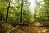 Dein Wald