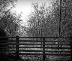 Woods and fence in B&W for Friday