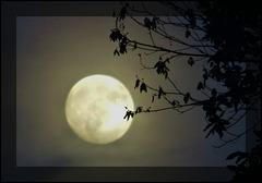 Il ne faut pas demander la lune quand on a déjà les étoiles..