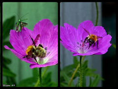 Dans mon jardin .