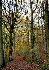 Dorer l'automne