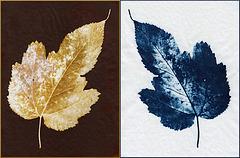 sepia and cyano leaf