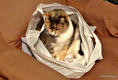 Bagged!