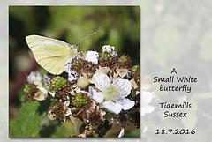 Small White - Tidemills  - 18.7.2016