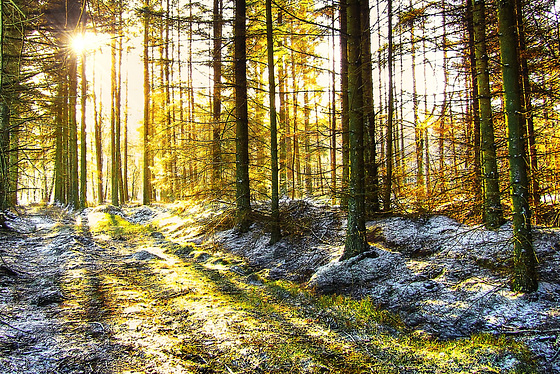 Winter sun in the Forest