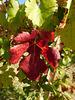 Feuille couleur d'automne