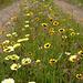 Penedos, Flowery path