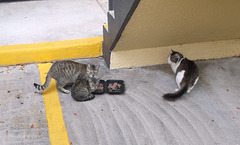 Les chats de la place / Happy cats despite their homeless status