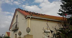 """""""Pigeons on a Hot Tile Roof"""""""