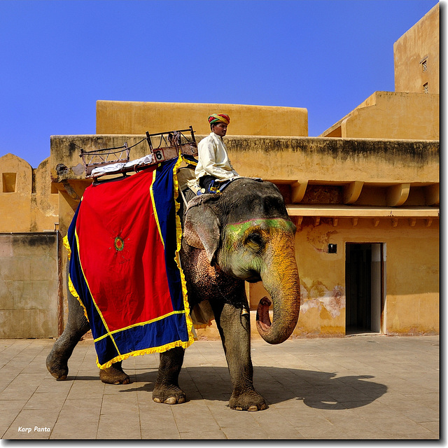"""Amer Fort Palace"" -  Jaipur - Rajasthan - INDIA"