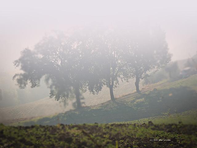 8:11 h ... noch ist der Nebel da