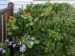 DSC 0713ac Home Flowers