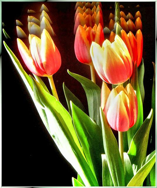 Five Tulips .ulips ..lips ...ips ....ps .....s  ©UdoSm