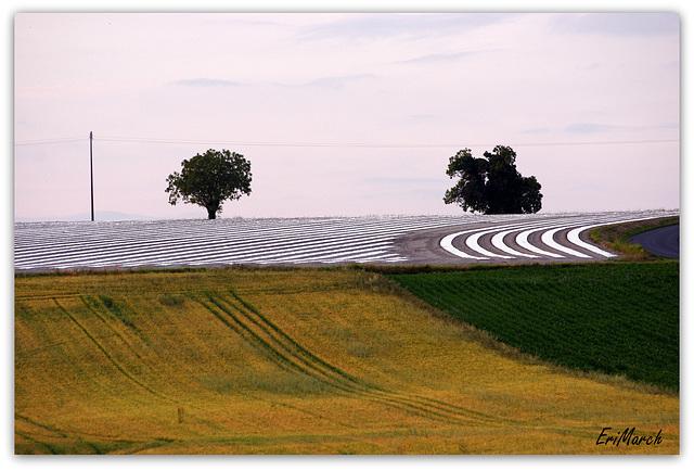 Des lignes dans les champs..