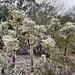 An Enchanted Forest – Desert Botanical Garden, Papago Park, Phoenix, Arizona