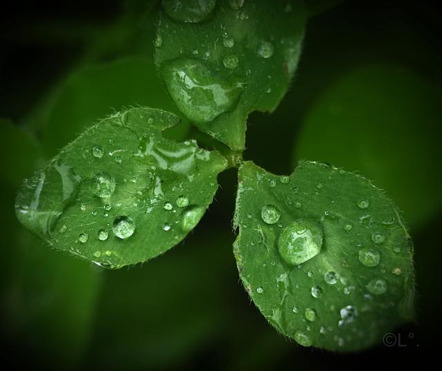...il a plu toute la matinée ici...