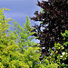 Foliage Variations.