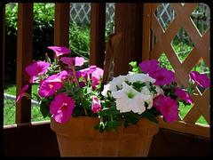 Pour fleurir votre dimanche !