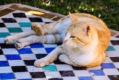Cool Cat; relaxed !