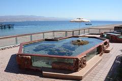 Israel, Eilat, Aquarium for Turtles in the Marine Park