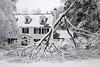 Toppled tree branch