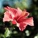 Madeira Funchal May 2016 Xpro2 Touit 50mm Gardens 1
