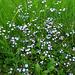 Exquisite little Scottish wildflowers.