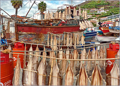 Câmara De Lobos : Barche da pesca e pesci a seccare nel piccolo porto