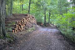 Tree felling... 'Eckington woods' - South Sheffield.