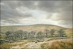 Moorland in Late Winter