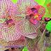 Orchidtopia