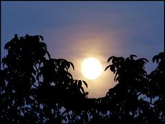 La lune en son berceau  [ON EXPLORE]