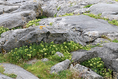 Flowers amid the rocks